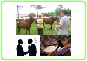 馬購入サポート