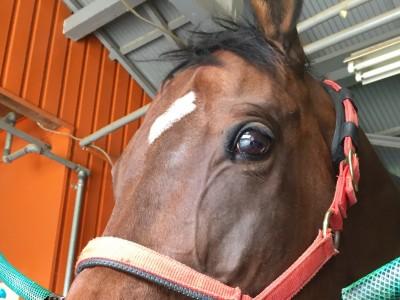 休養牧場ライジングの乗馬「ドマーニ号」