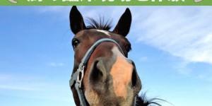 馬の臨床現場を体験しよう!