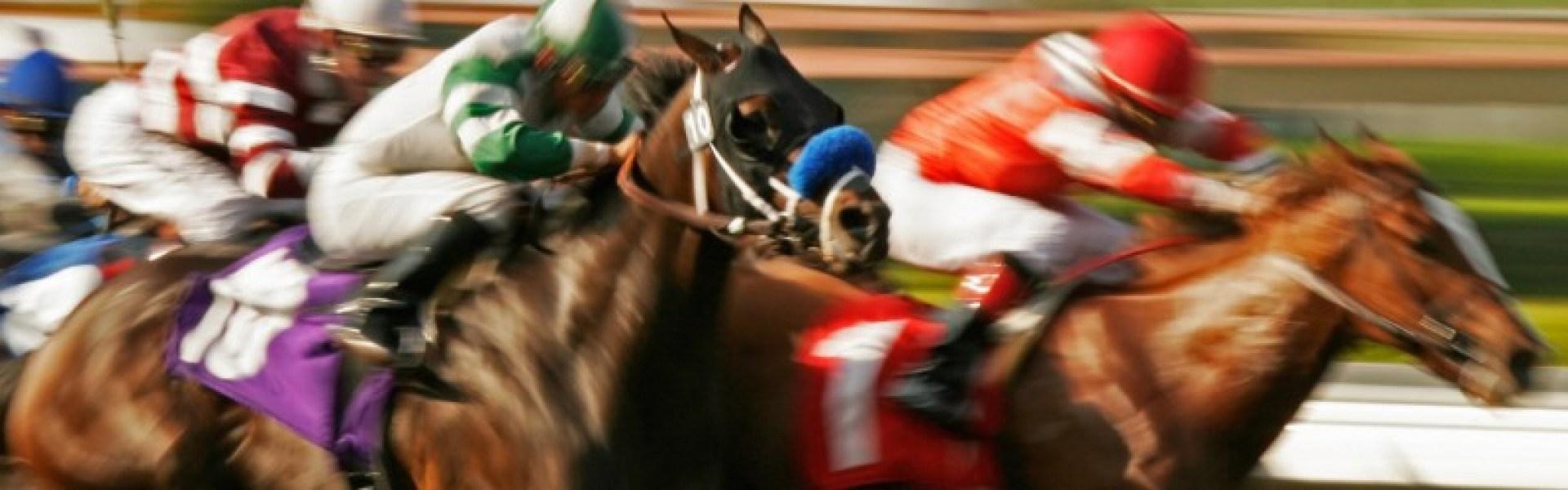 馬の獣医 Kawata Equine Practice