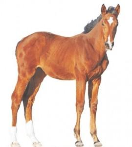 Kawata_horse