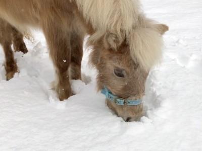 メイちゃん初めての雪あそび