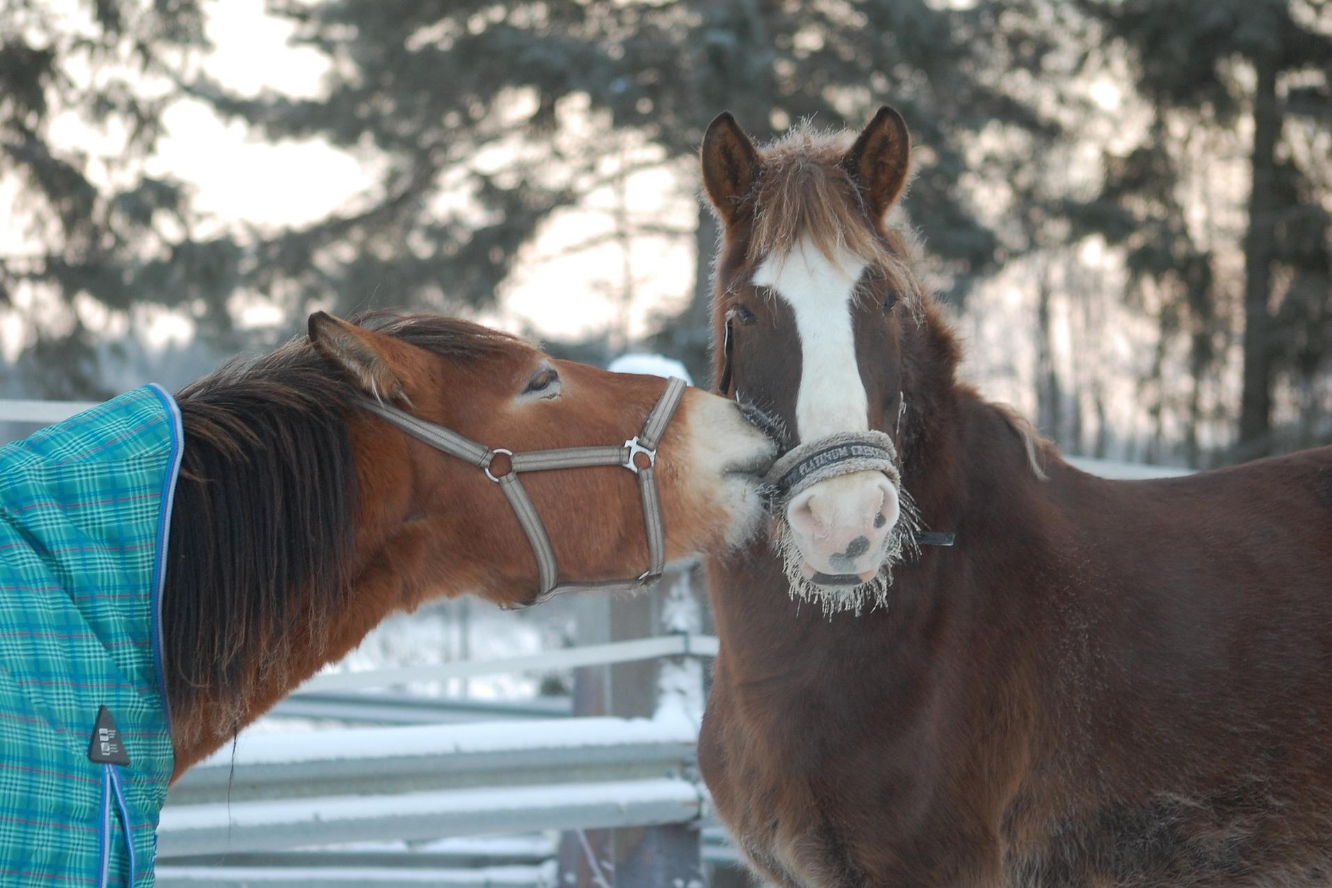 horse-752833_1920