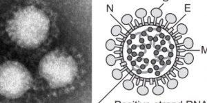 話題のウイルス