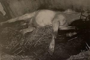 馬の予防接種 〜日本脳炎ウイルス〜
