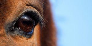 馬の瞳について