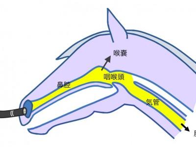 内視鏡検査:呼吸器の検査について