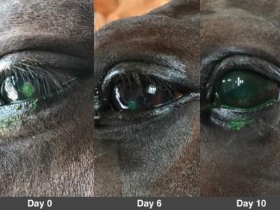 眼の傷と血清点眼液