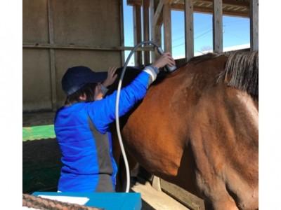 馬の背部痛について