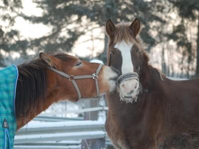 馬鼻肺炎について